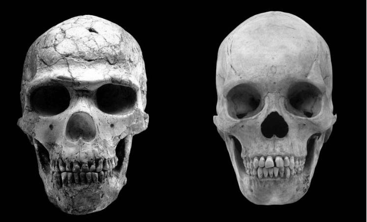 Что делает человека человеком (сравнение черепов)
