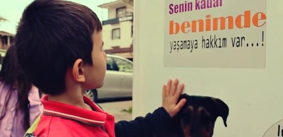 Уличные автоматы Pugedon: помогая себе, мы помогаем бездомным животным