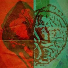 Правила мозга: от эмоций до мультизадачности