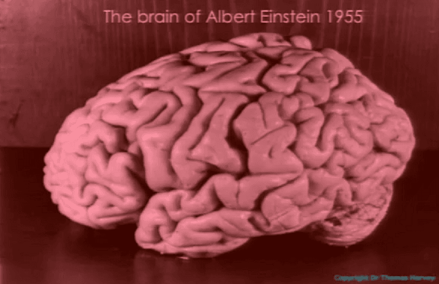 """love in the brain essay Stories stimulate the brain metaphors like """"he had leathery hands"""" rouse the sensory cortex."""