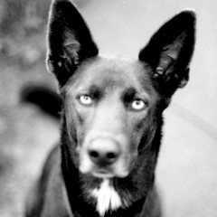 Коротко: есть ли у собак зеркальные нейроны?