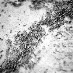«Эволюционные корни добра и зла: бактерии, муравьи, человек»: публичная лекция Александра Маркова