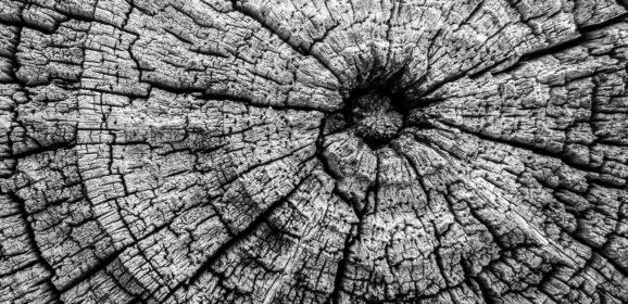 «Всё тлен»: семь ученых описывают семь видов старения