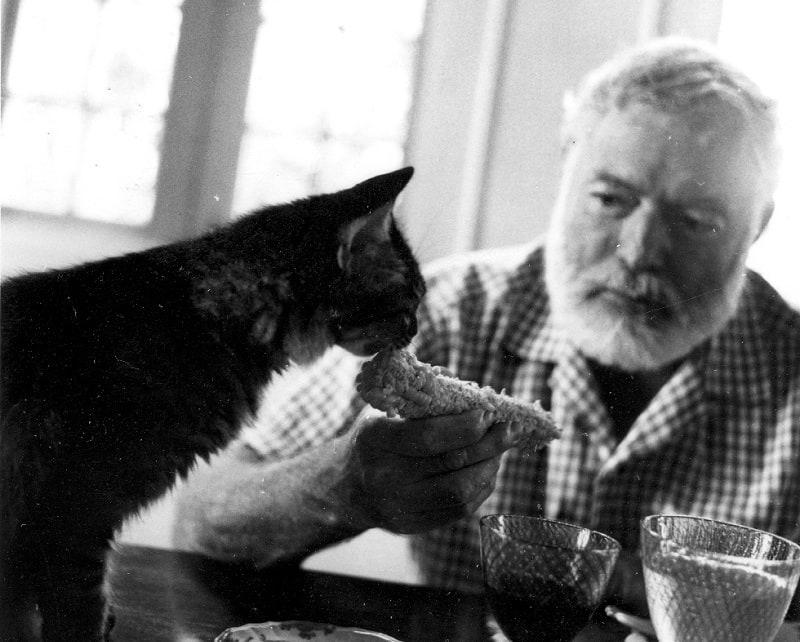 Хемингуэй и кот