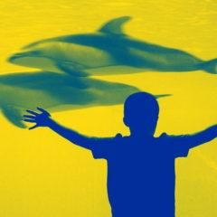 «Авангард материи»: интеллект дельфинов как наша проекция и мостик к непознанному