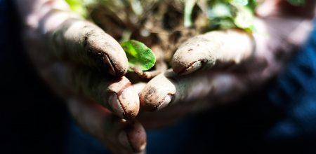 6 впечатляющих лекций TED о том, как спасти нашу планету